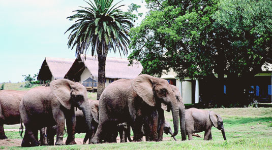 Gorah Elephant Camp - Greater Addo Elephant Park