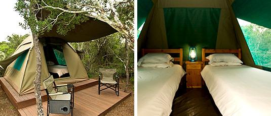 Spekboom Tented Camp, Addo Elephant Park - Greater Addo